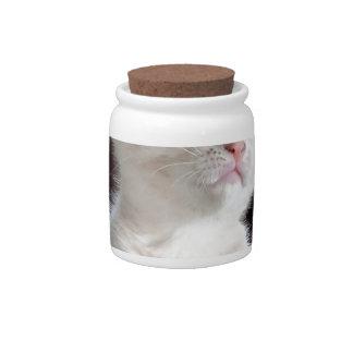 Super Cute White Kitten Candy Jar