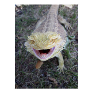 Super Happy Bearded Dragon Poster