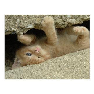 Super Hero Kitty Cat Postcard
