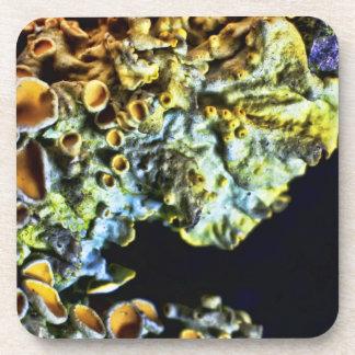 Super Macro Tree Lichen cork coaster set