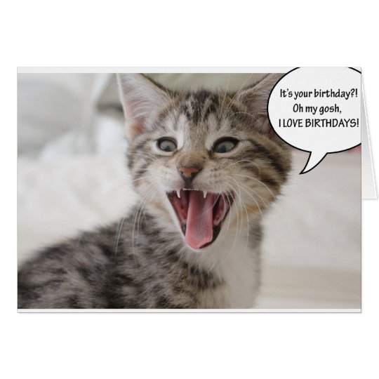 Super Surprised Birthday Kitten! Card