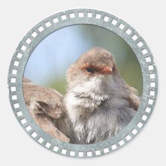 Superb Fairy Wren Classic Round Sticker