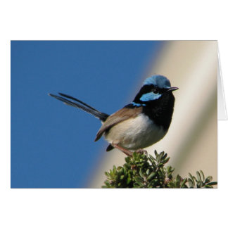 Superb Fairy Wren Stationery Note Card