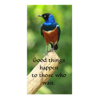 Superb Starling Bird  Quote Photo Card