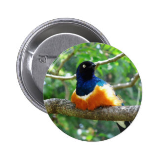 Superb Starling Pinback Buttons