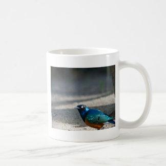 Superb Starling Mugs