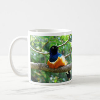 Superb Starling Coffee Mugs
