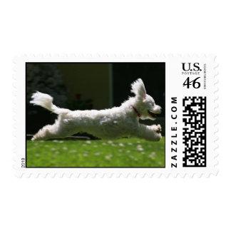 SuperDog Stamps