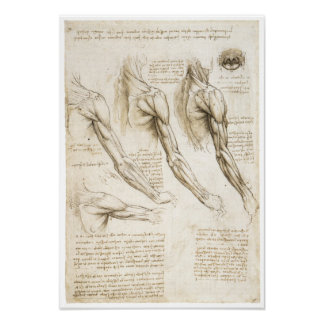 Superficial Muscles of the Upper Extremity Poster