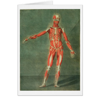 Superficial Muscular System of the Front of the Bo Card