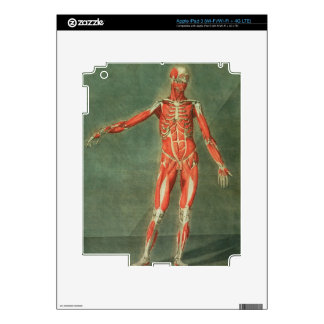 Superficial Muscular System of the Front of the Bo iPad 3 Decals