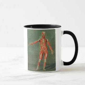 Superficial Muscular System of the Front of the Bo Mug