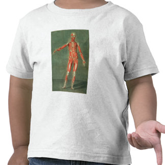 Superficial Muscular System of the Front of the Bo T Shirt