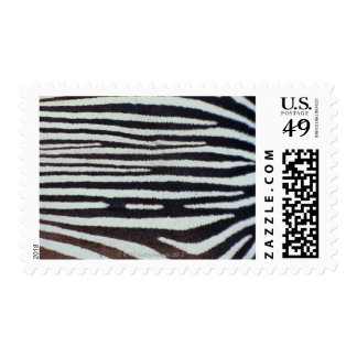 Superficie de la piel de la cebra sellos postales