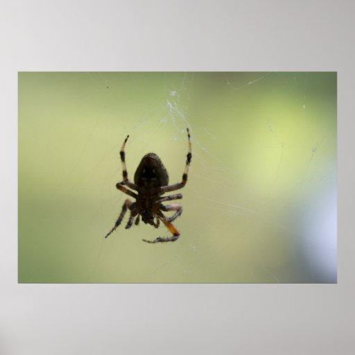 Superficie inferior de la araña póster