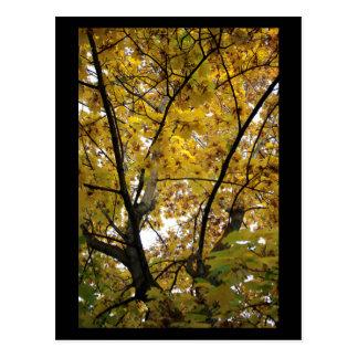 Superficie inferior de las hojas del amarillo en tarjeta postal