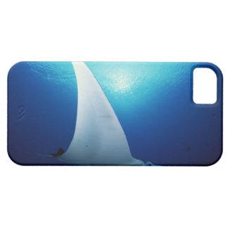 Superficie inferior de un rayo de manta iPhone 5 cobertura