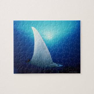 Superficie inferior de un rayo de manta puzzles con fotos