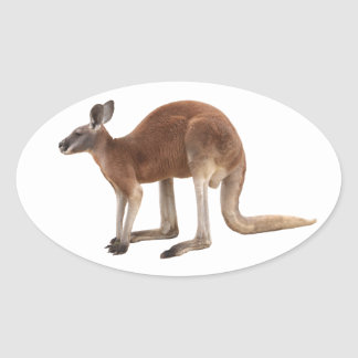 Superior product of kangaroo oval sticker