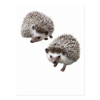 Superior product of porcupine postcard