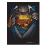 Superman Chest Sketch 2 Postcard