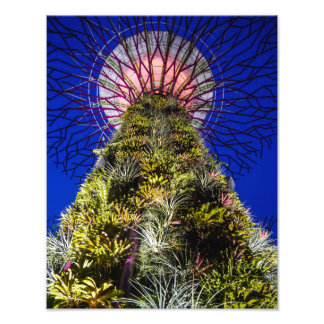 Supertree Grove, Gardens by the Bay - Photo Print