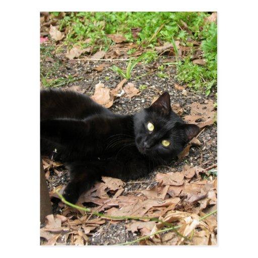Superviviente de Katrina del gato de la pimienta Postales