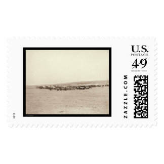Supply Wagons & Pack Mules SD 1887 Postage Stamps
