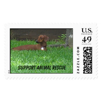 Support Animal Rescue Postage Stamp
