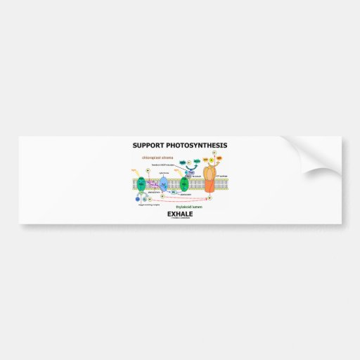 Support Photosynthesis Exhale (Biochemistry Humor) Car Bumper Sticker