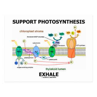 Support Photosynthesis Exhale (Biochemistry Humor) Postcard