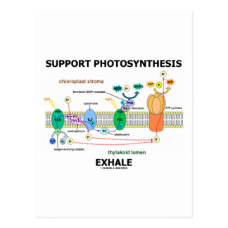 Support Photosynthesis Exhale (Environmental) Postcard