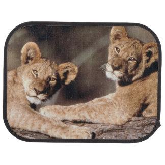 Suráfrica, cachorros de león alfombrilla de coche