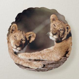 Suráfrica, cachorros de león cojín redondo