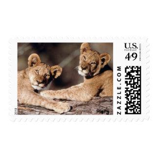 Suráfrica, cachorros de león estampilla