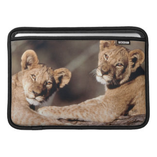 Suráfrica, cachorros de león fundas para macbook air