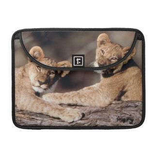 Suráfrica, cachorros de león fundas para macbook pro
