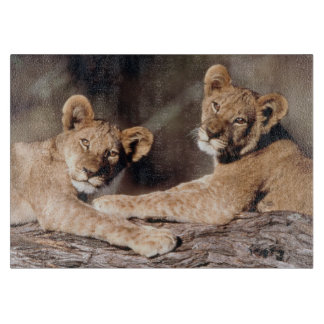 Suráfrica, cachorros de león tabla para cortar