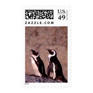 Suráfrica, ciudad de Simons. Pingüinos de Jackass Estampilla