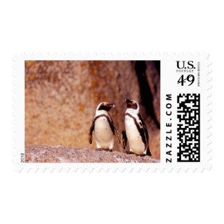 Suráfrica, ciudad de Simons. Pingüinos de Jackass Sellos