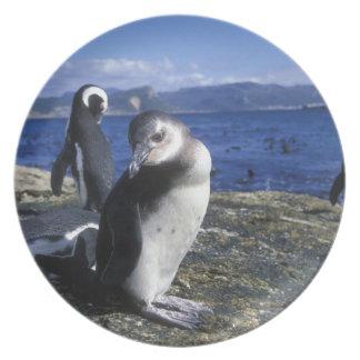 Suráfrica, la ciudad de Simon, pingüino de Jackass Platos De Comidas