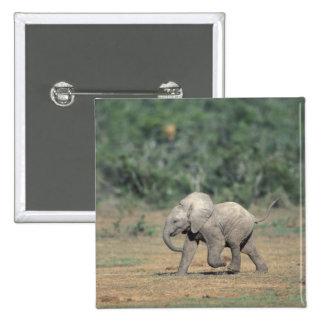 Suráfrica, parque nacional del elefante de Addo. B Pin Cuadrada 5 Cm