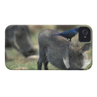 Suráfrica, Pilanesburg GR, Warthog iPhone 4 Case-Mate Protector