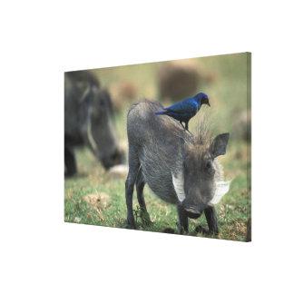 Suráfrica, Pilanesburg GR, Warthog Impresiones En Lienzo Estiradas