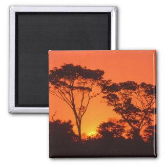 Suráfrica.  Puesta del sol africana Imán Cuadrado