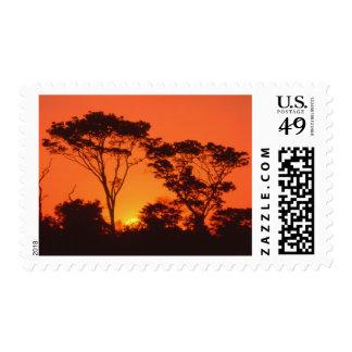 Suráfrica.  Puesta del sol africana Envio