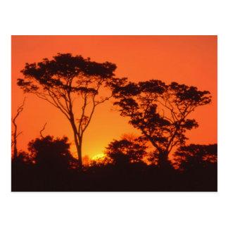 Suráfrica Puesta del sol africana Tarjeta Postal