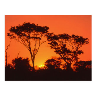 Suráfrica.  Puesta del sol africana Tarjetas Postales