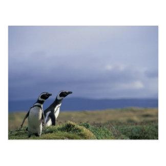 Suramérica, Chile, Patagonia, Magellanes, 2 Tarjetas Postales