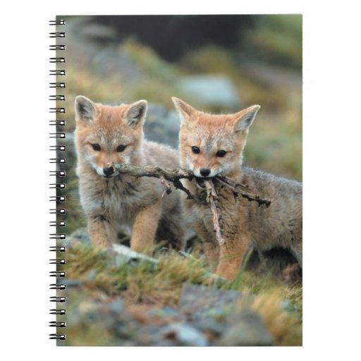 Suramérica, Chile, Torres del Paine National Cuadernos